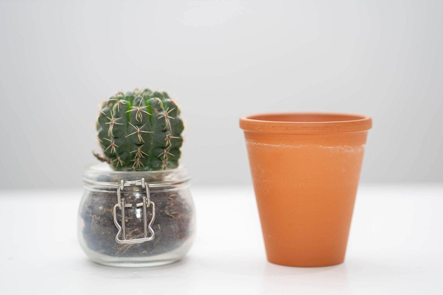 repotting a houseplant
