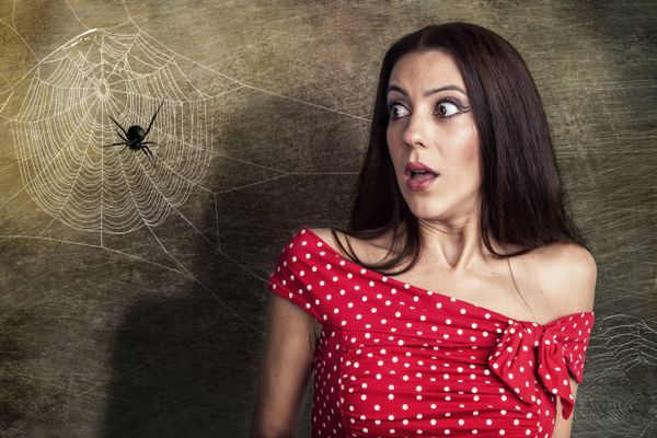 How to Get Rid of Spiders from your Home | Cleanipedia