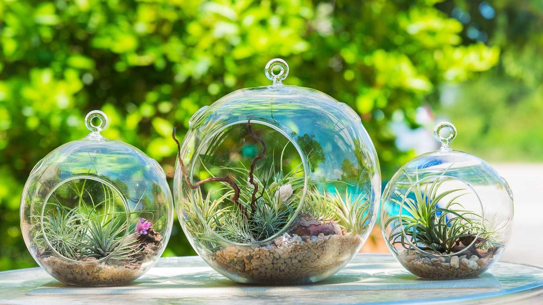 Tự làm cây tiểu cảnh Terrarium xanh trang trí trong nhà