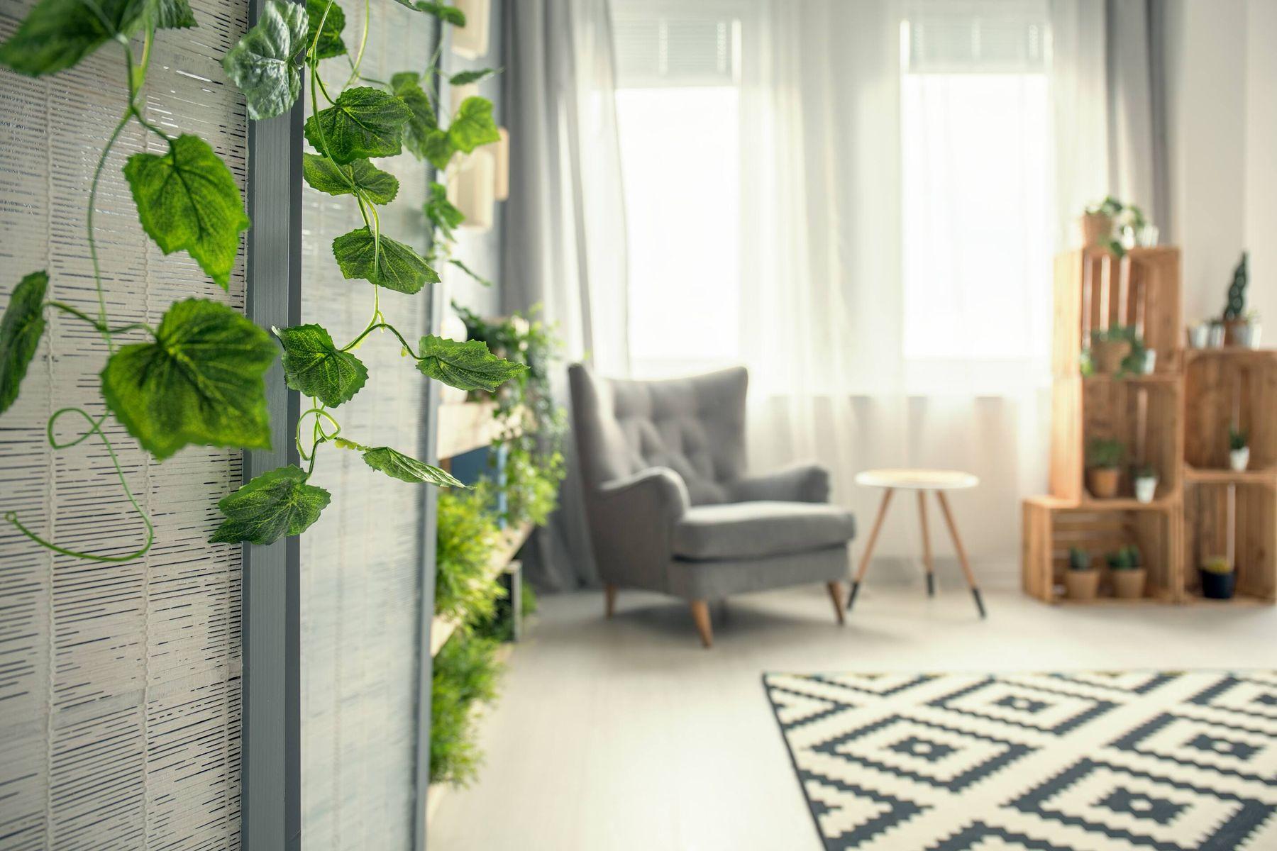 Wohnzimmer mit Sessel und Tisch und Efeusämling von der Wand herab