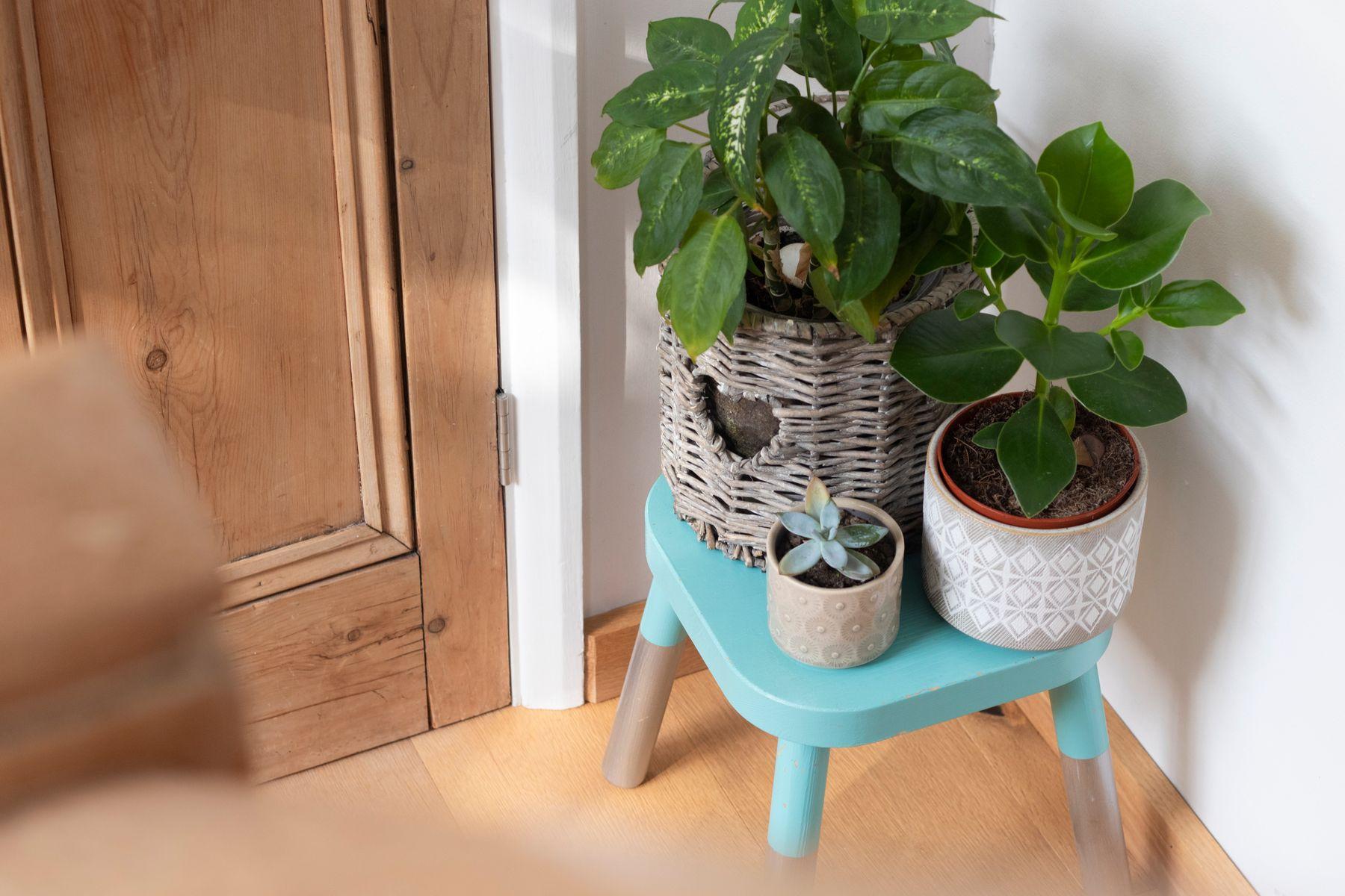 Três vasos de plantas em banquinho no canto da sala