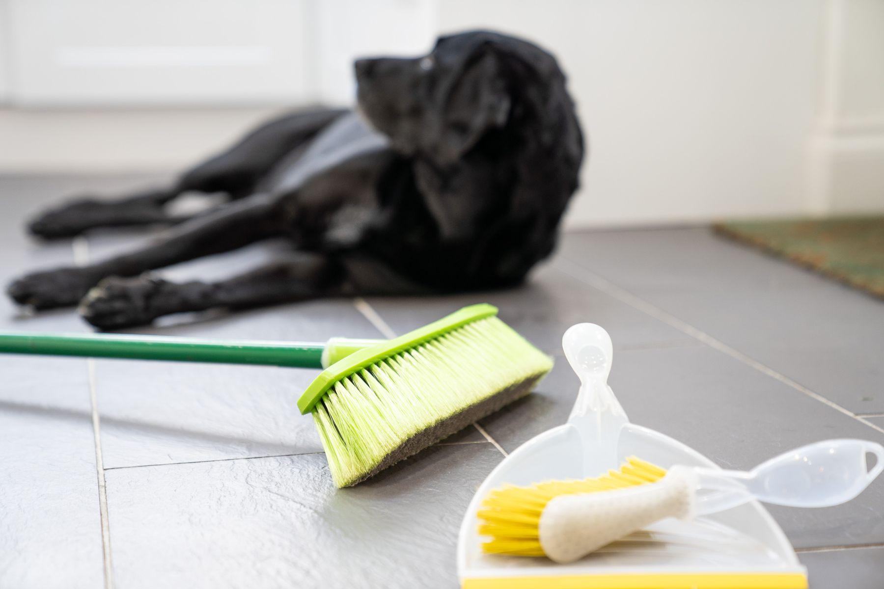 Cachorro preto descansa  acompanhado de uma vassoura,  escovão e pá