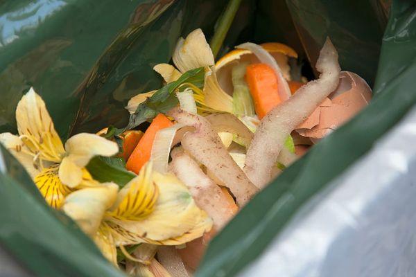 Cascas de frutas e verduras em saco de lixo verde