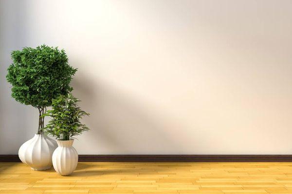 Beragam Manfaat Tanaman Hias bagi Lingkungan dan Kesehatan
