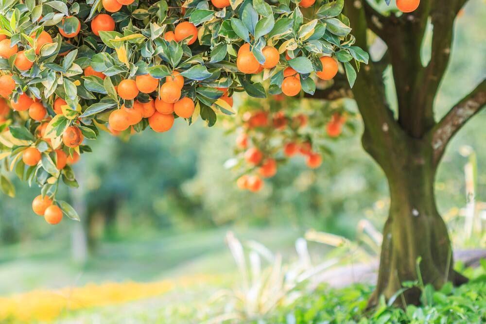 Hunian Asri dan Sehat dengan 5 Jenis Tanaman Hias Ini!
