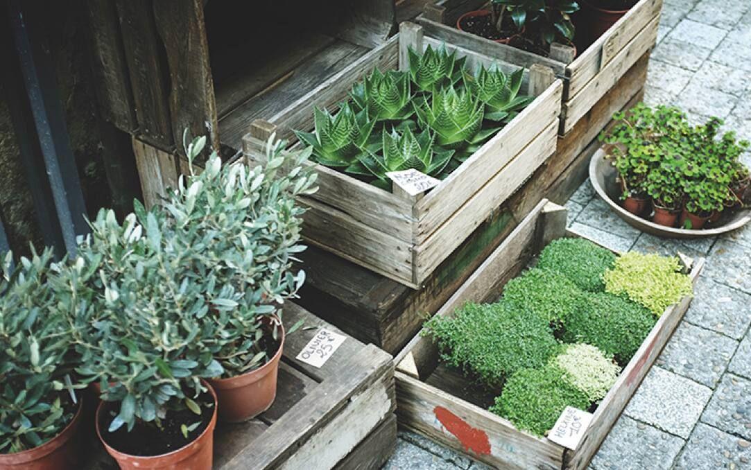 Loại cây trồng trong nhà khử mùi sơn hiệu quả