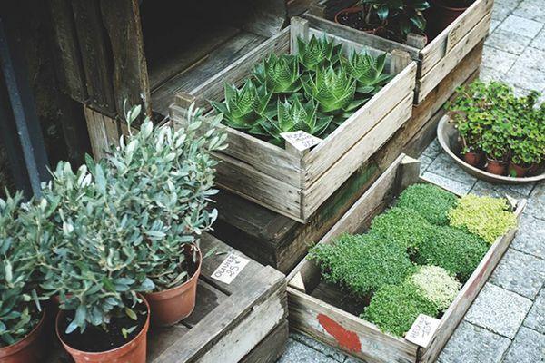 quatro caixotes e um prato cheios de plantas de modelos variados colocados no chão