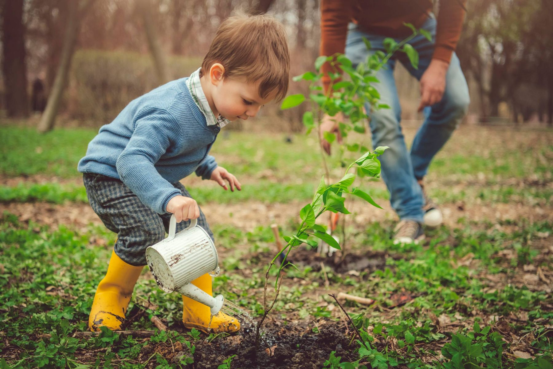 Cách chăm sóc cây cảnh cho người mới bắt đầu