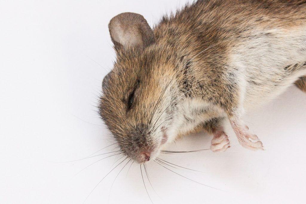 Mức độ nguy hiểm của thuốc diệt chuột
