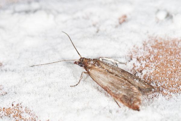 a close-up shot of a moth