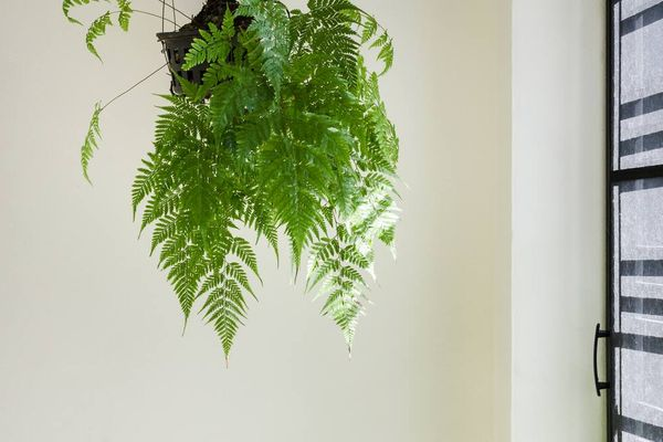 air purifying plant in home