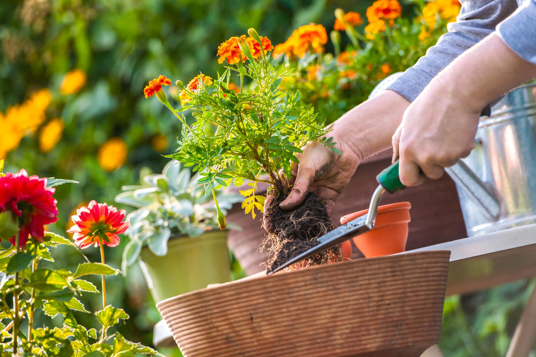 Image of plants being handled