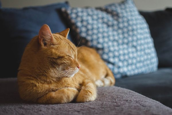 Gato deitado no sofá