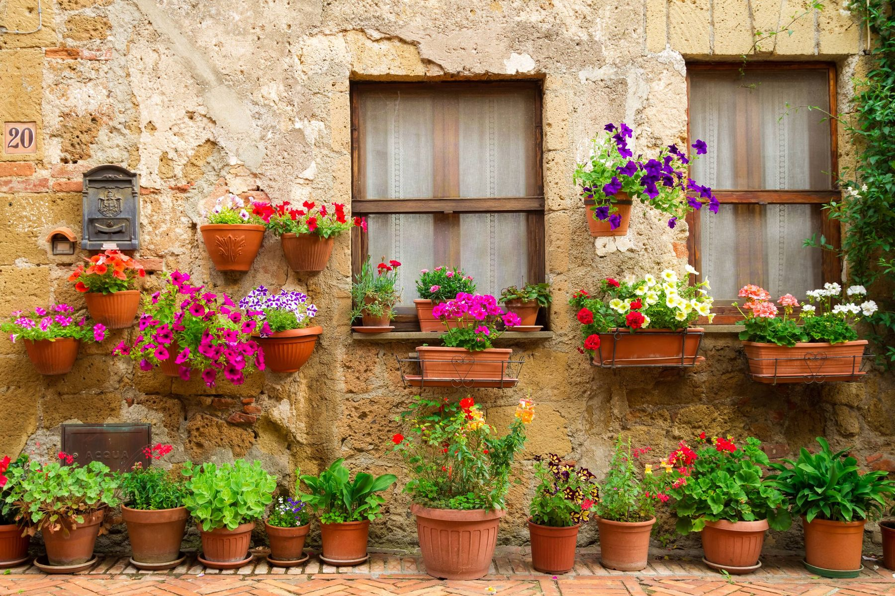 How to Clean Flower Pots | Cleanipedia