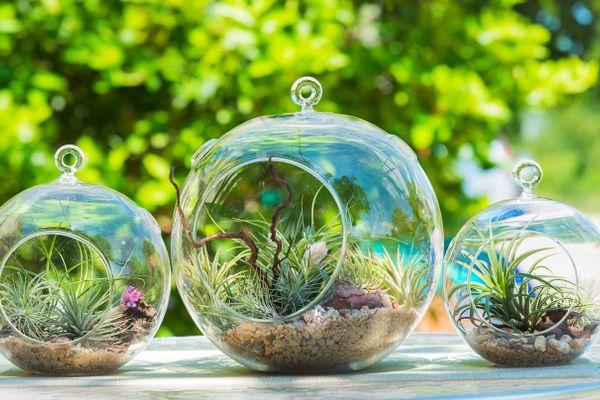 3 Mô hình trồng rau sạch tại nhà đơn giản và năng suất cao