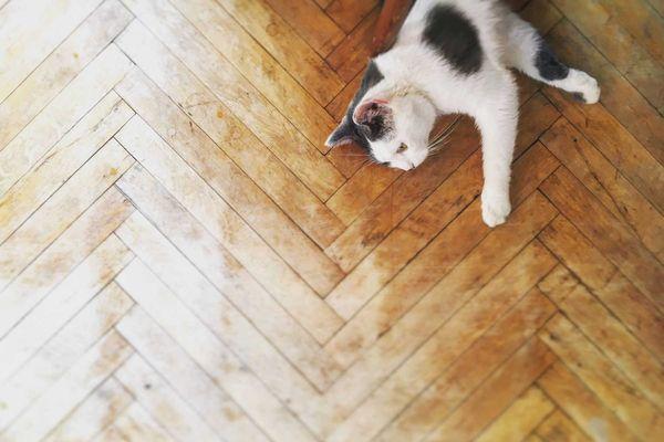 sàn nhà gỗ