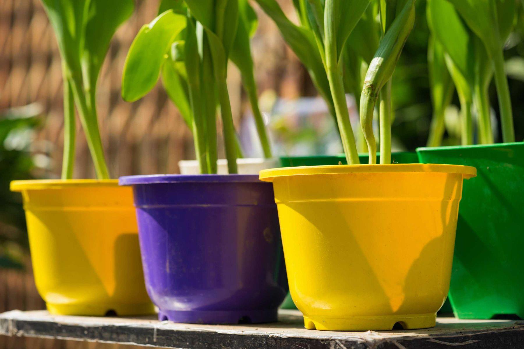10-dicas-de-como-cuidar-de-plantas