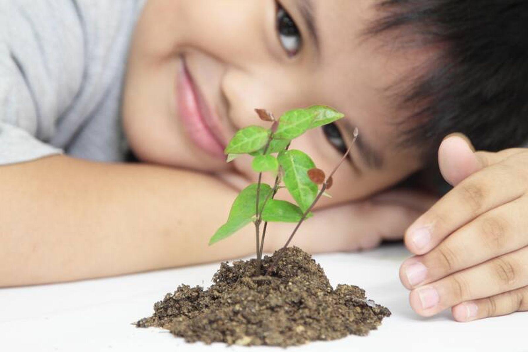 Điểm danh 8 loại rau sạch dễ trồng tại nhà