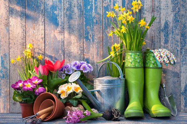 Plants in pots in the garden with green gardening boots