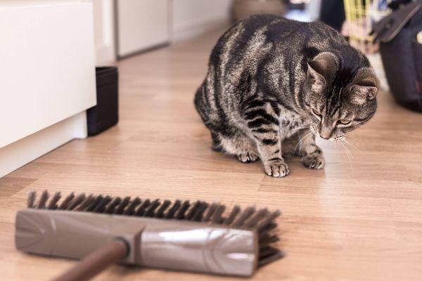 Katze, die Besen über Bretterboden betrachtet