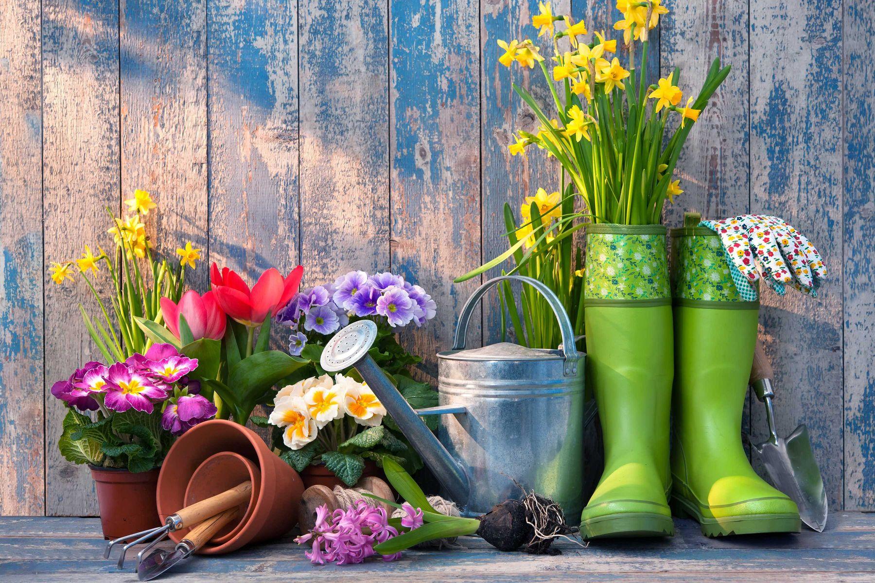 5-tipos-de-plantas-para-jardim-resistentes-ao-sol