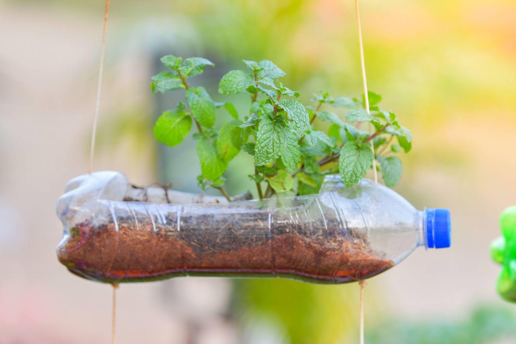 Cách tái chế chai nhựa thành giàn treo trồng rau