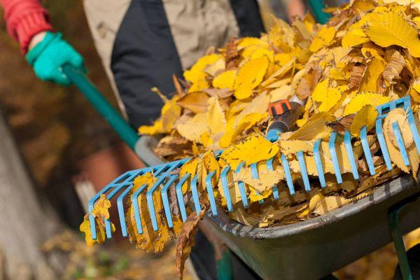 Tumpukan sampah daun di troli kebun