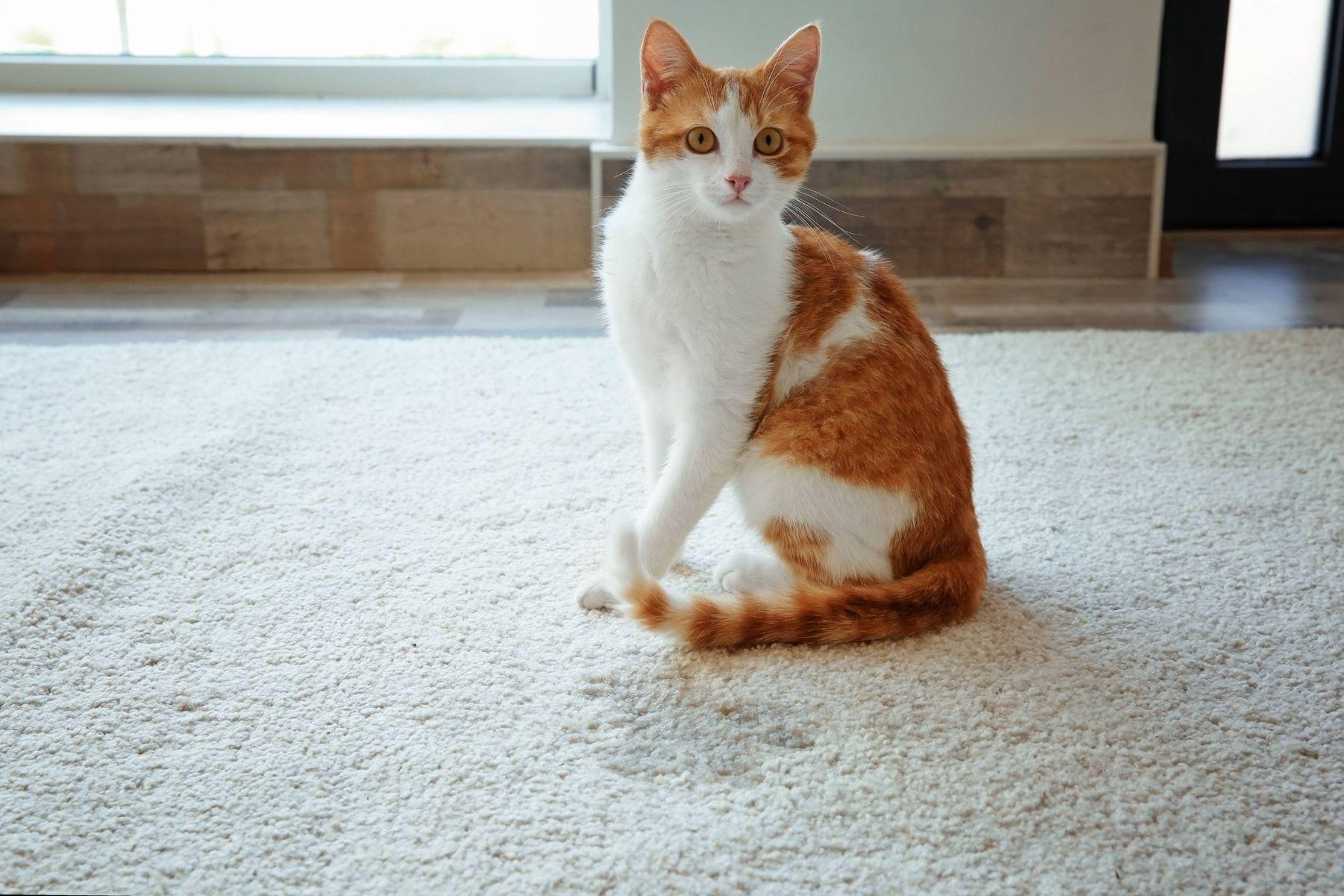 Halıdan kedi tüyü nasıl temizlenir?