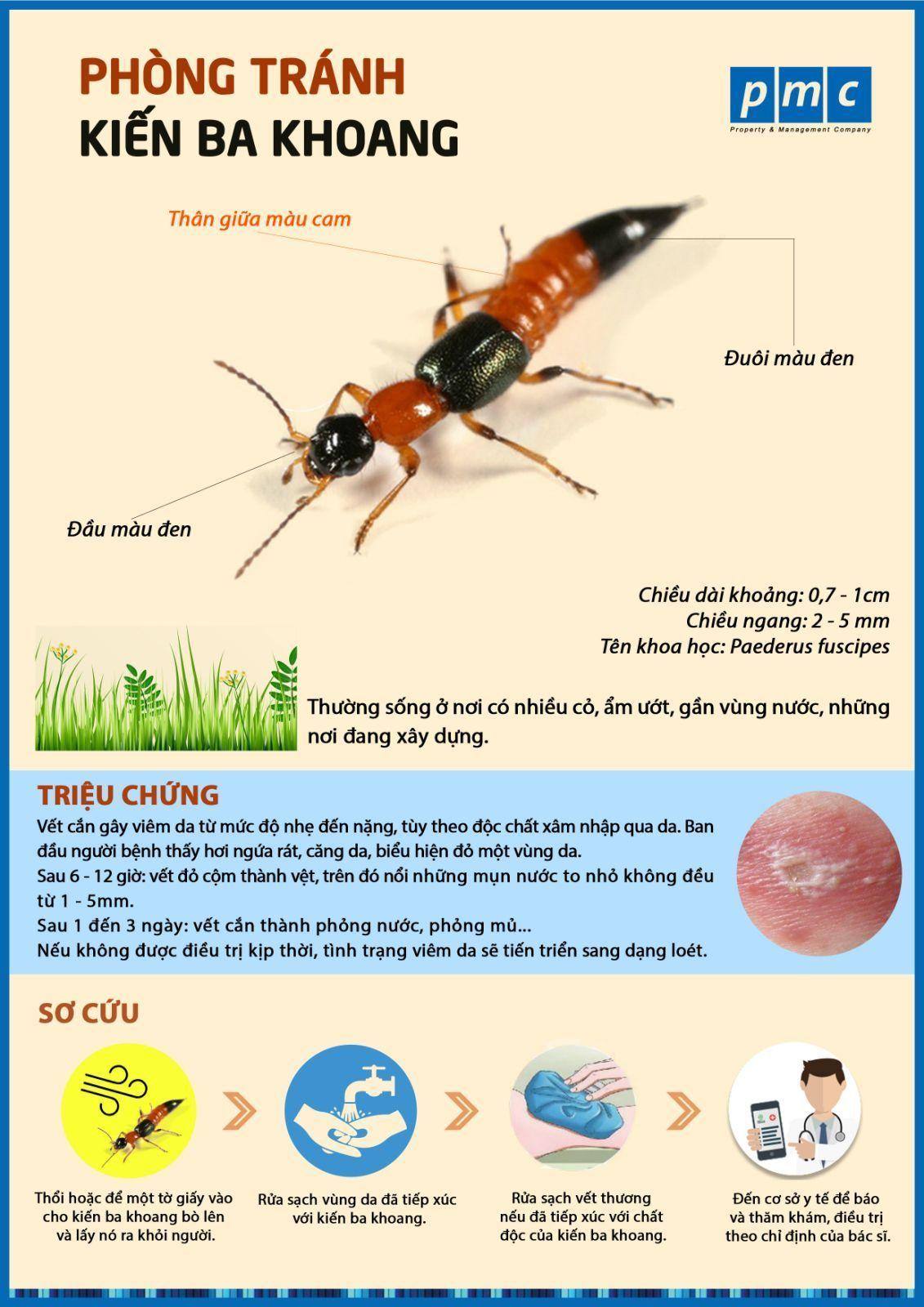 kiến ba khoang có nguy hiểm không