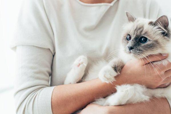 Evcil Hayvan Pasaportu Nasıl Alınır?