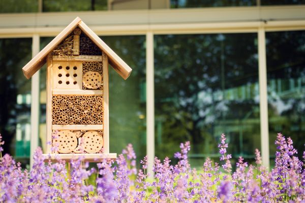 Casa de madera en jardín