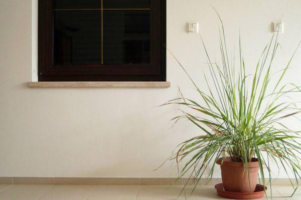 Có nên trồng cây trong phòng không?