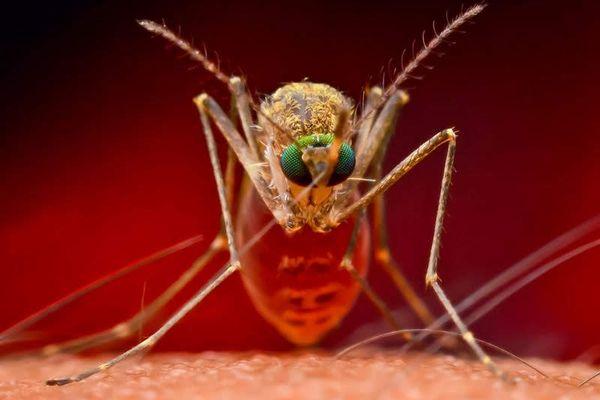 cách đuổi muỗi bằng sả ra khỏi nhà vĩnh viễn