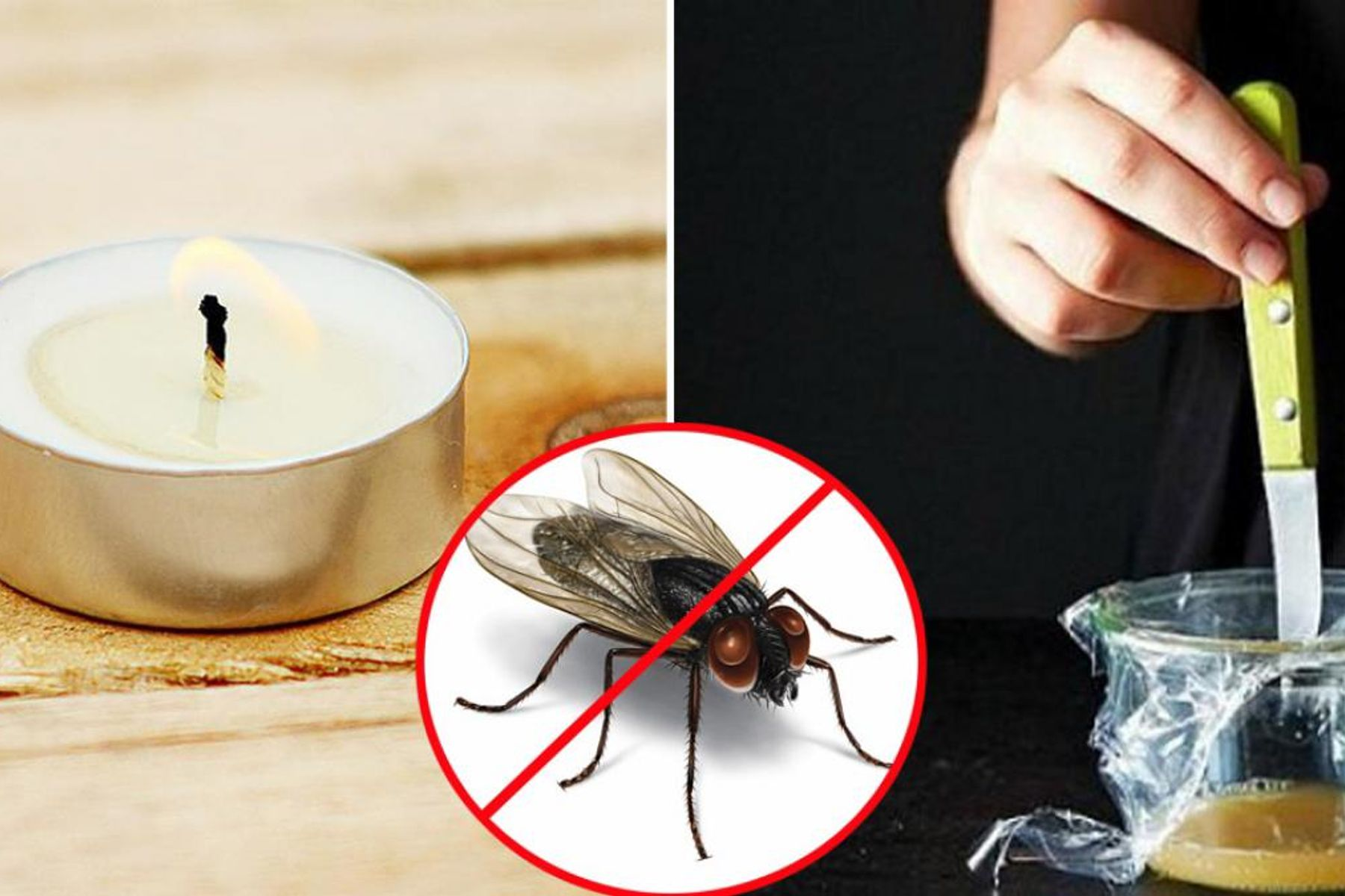 Cách diệt ruồi