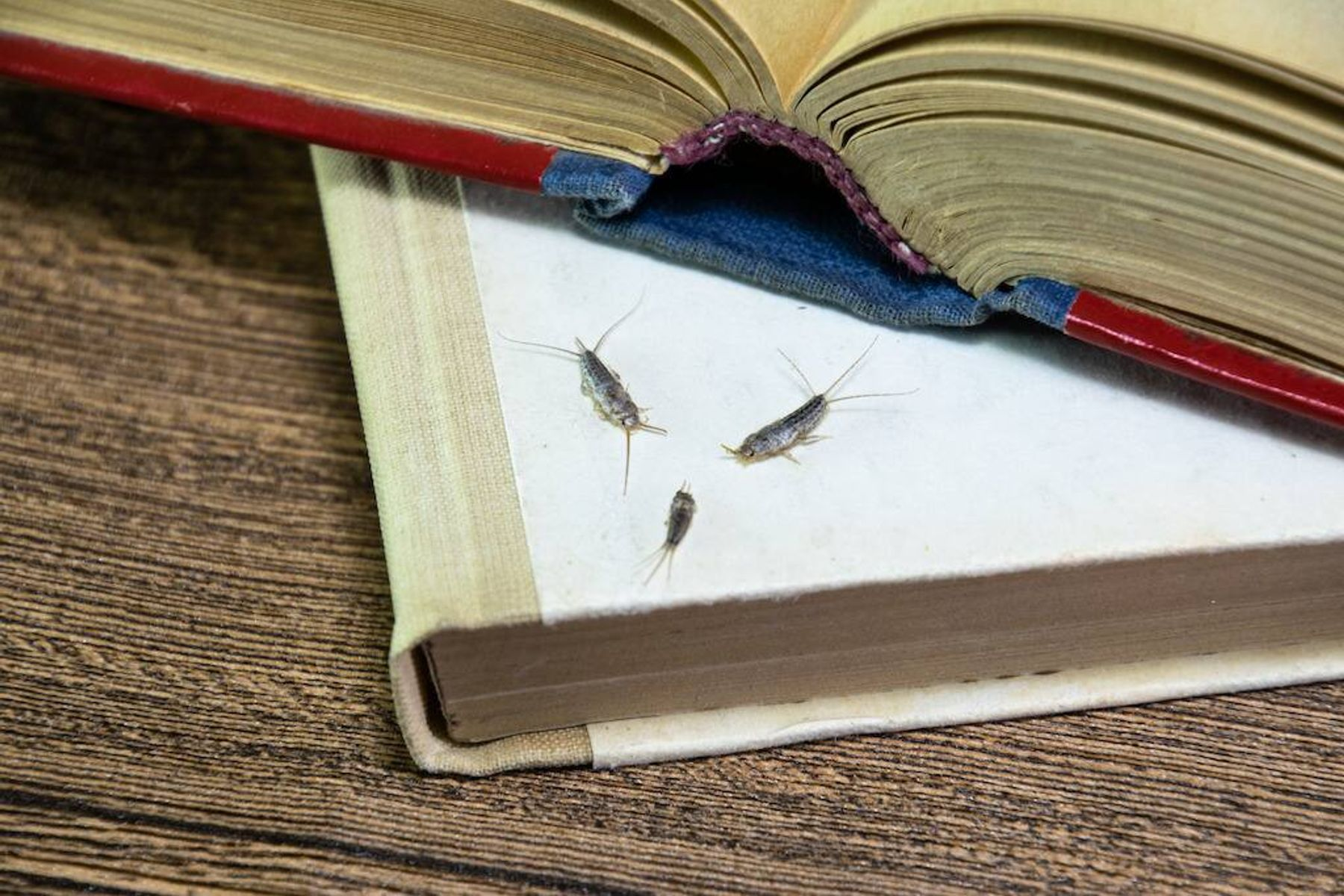 silverfish on a pile of books