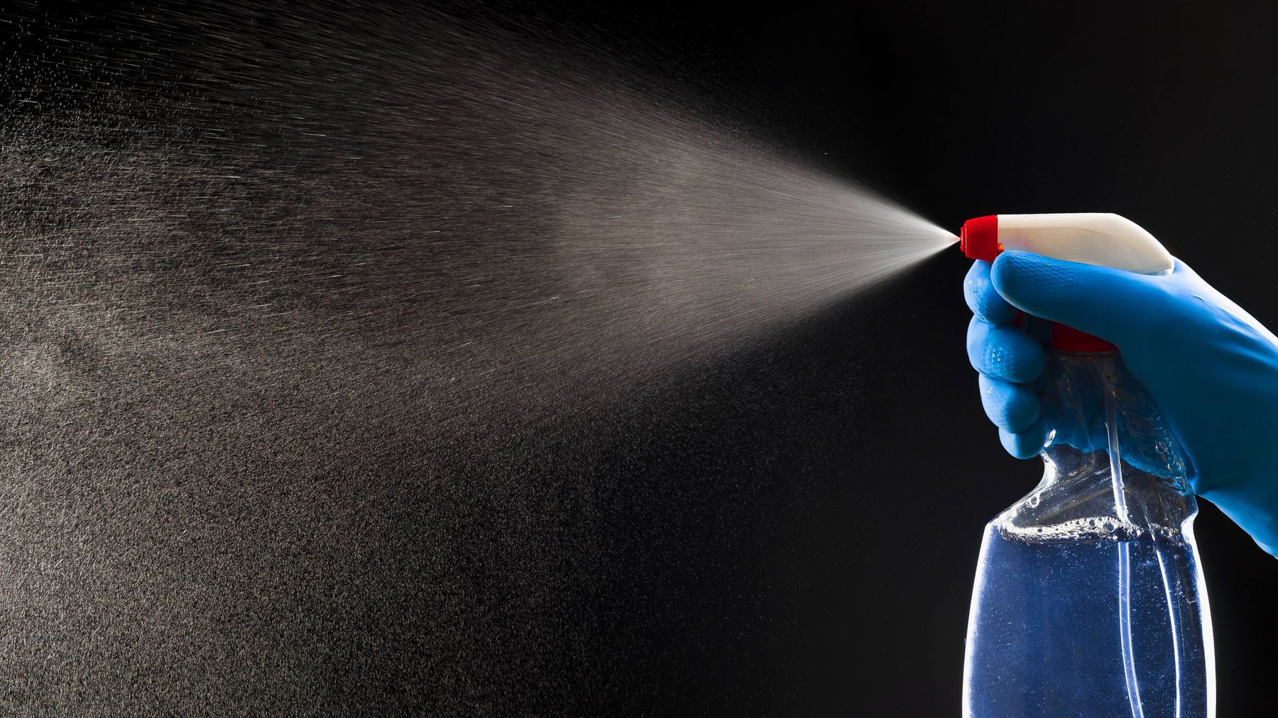 Spray a solution of soap and water