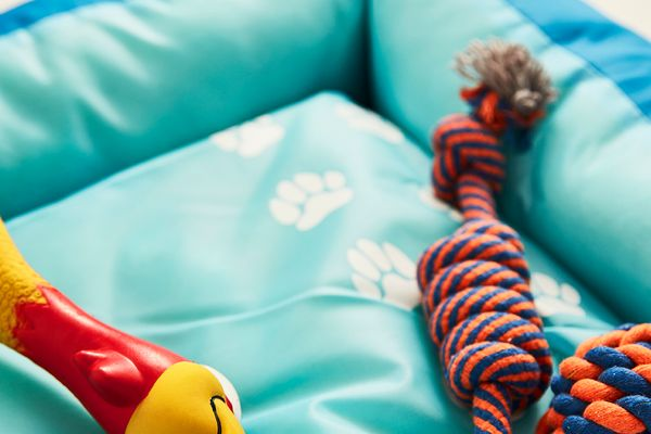 Brightly coloured dog toy and rope on blue dog bed