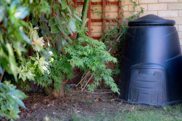 Cómo combatir babosas y caracoles en tu jardín