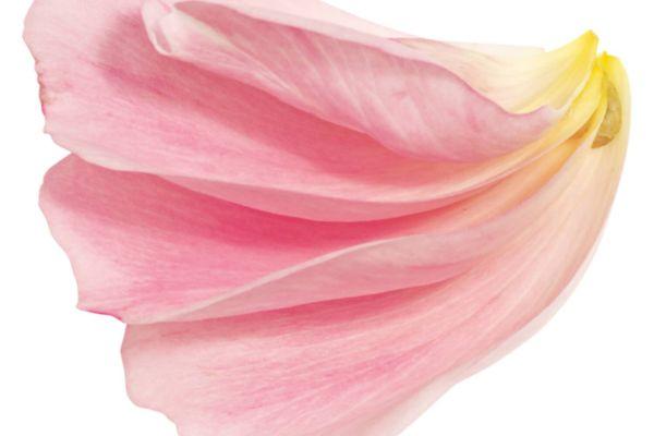 Những loại hoa tươi lâu nhất, bạn nên chọn mua