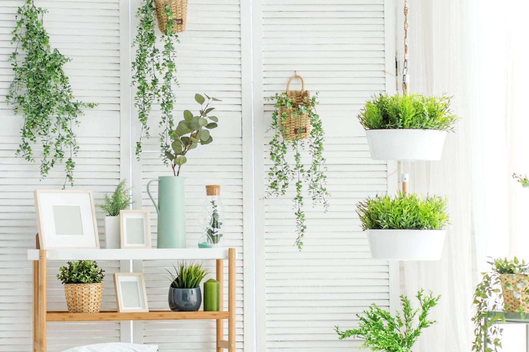 Những điều cần lưu ý để cây cảnh trồng trong nhà luôn tươi tốt
