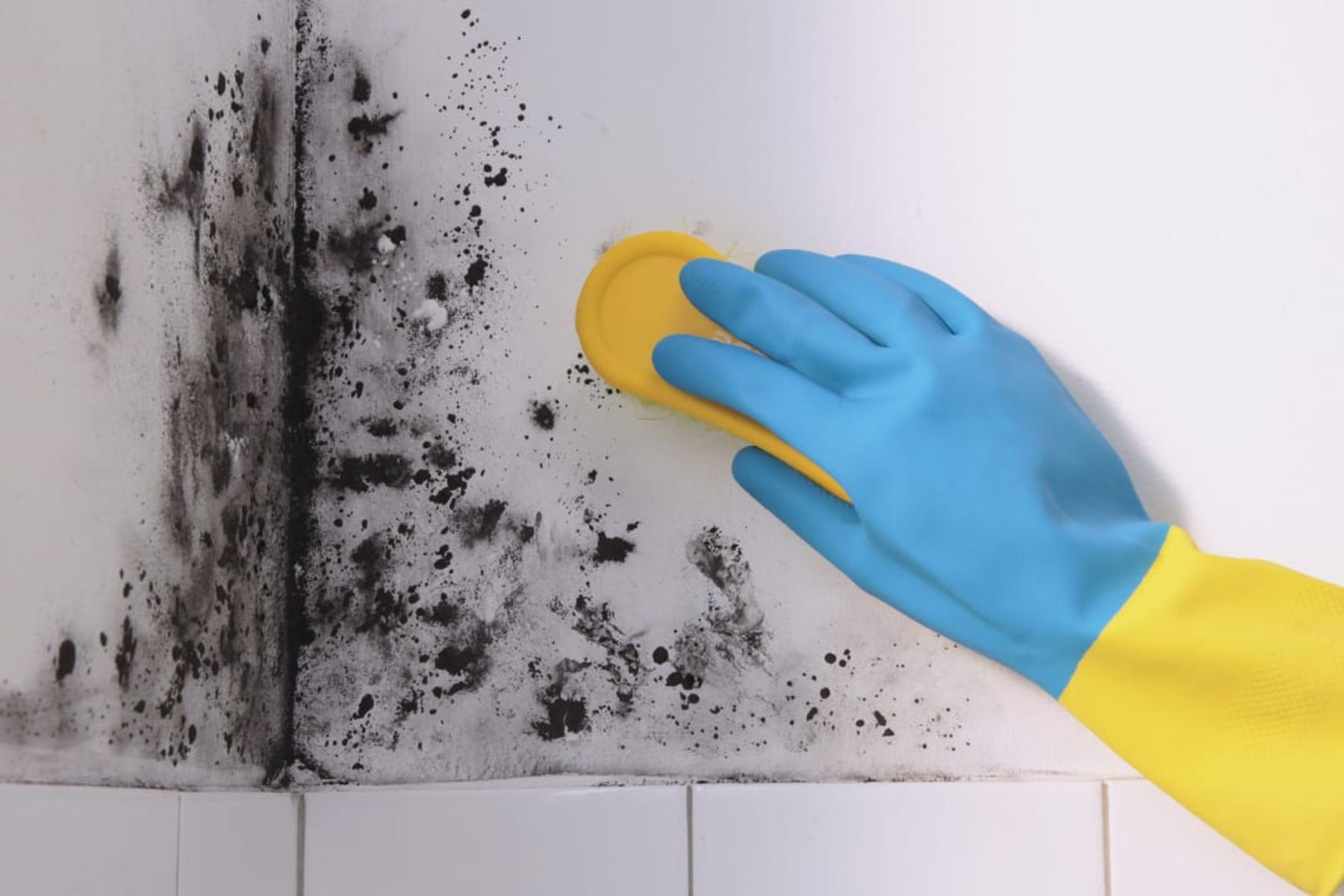 a hand in a colourful glove cleaning mould on a white wall
