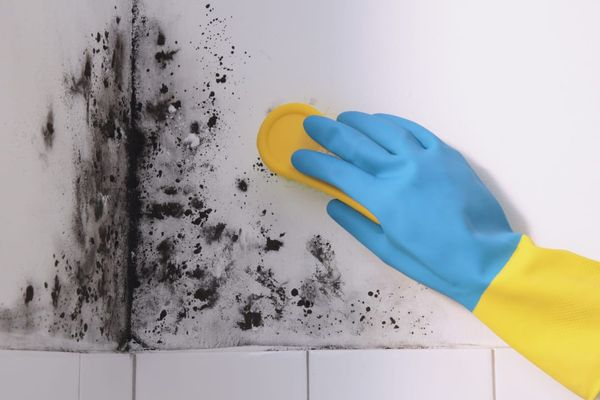 Mão com luva azul limpando parede mofada