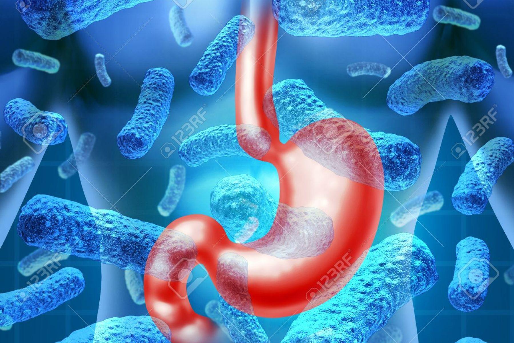 Vi khuẩn đường ruột là gì?