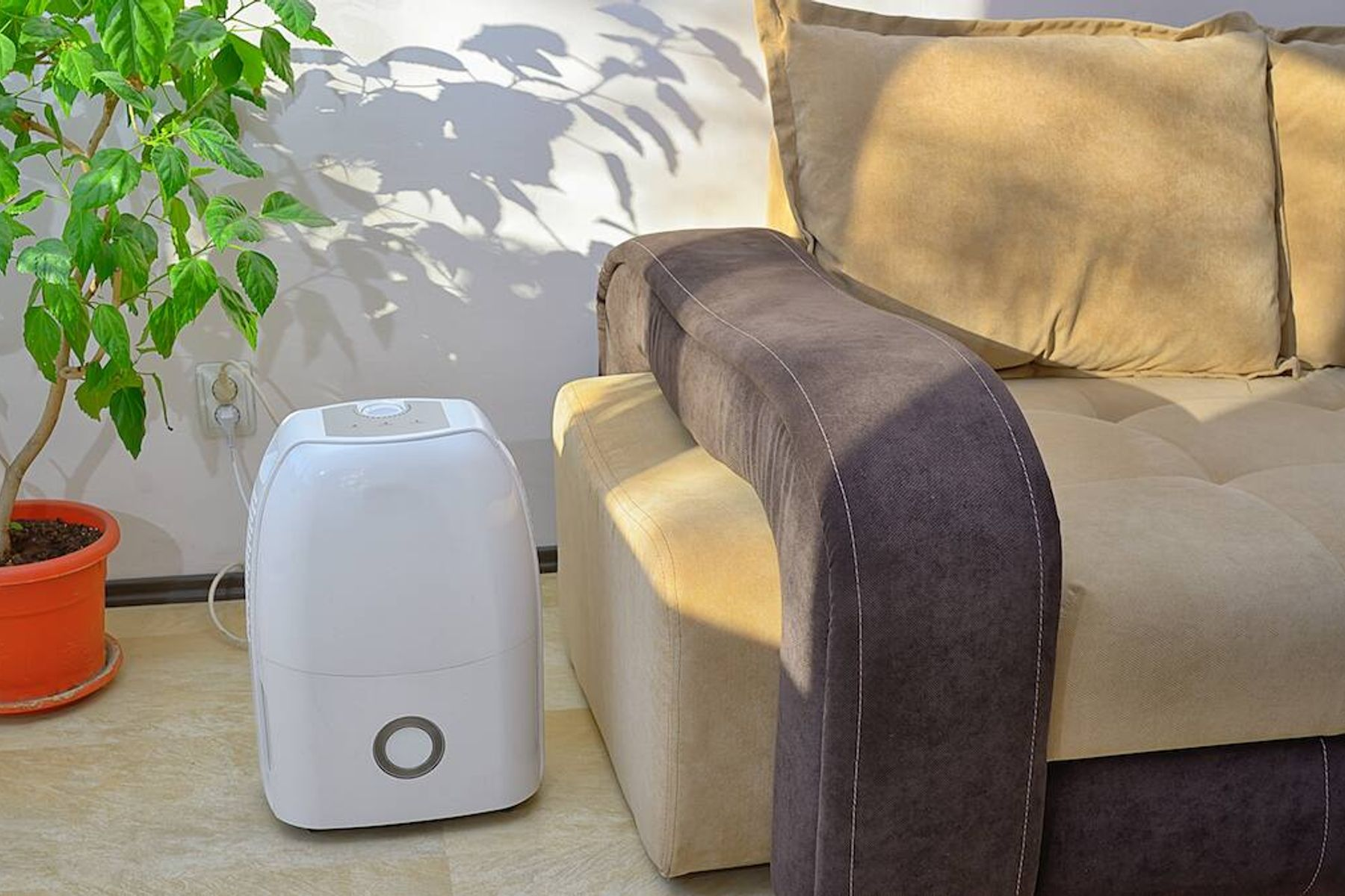 Dehumidifier sitting by a sofa inside with a potted houseplant: what does a dehumidifier do?