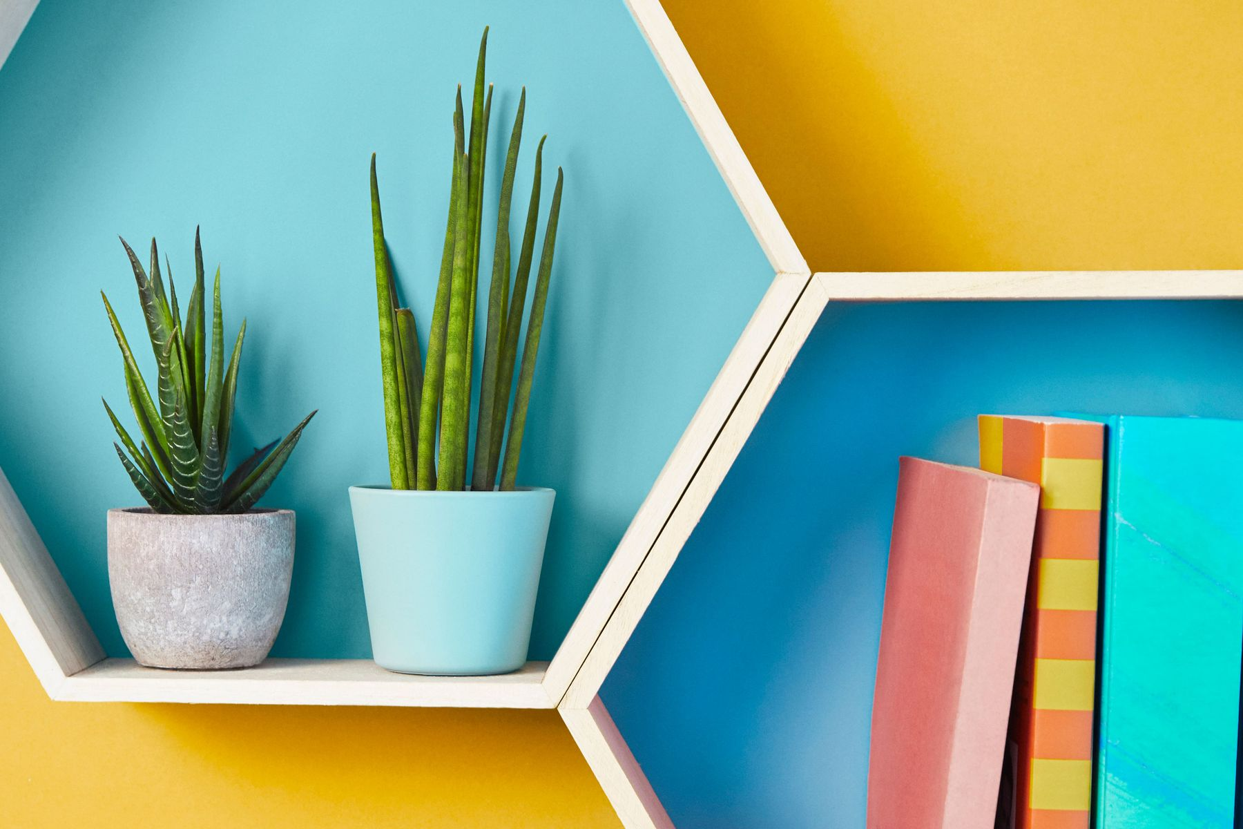 Blue octagonal shelving with books and flower plant against yellow backdrop