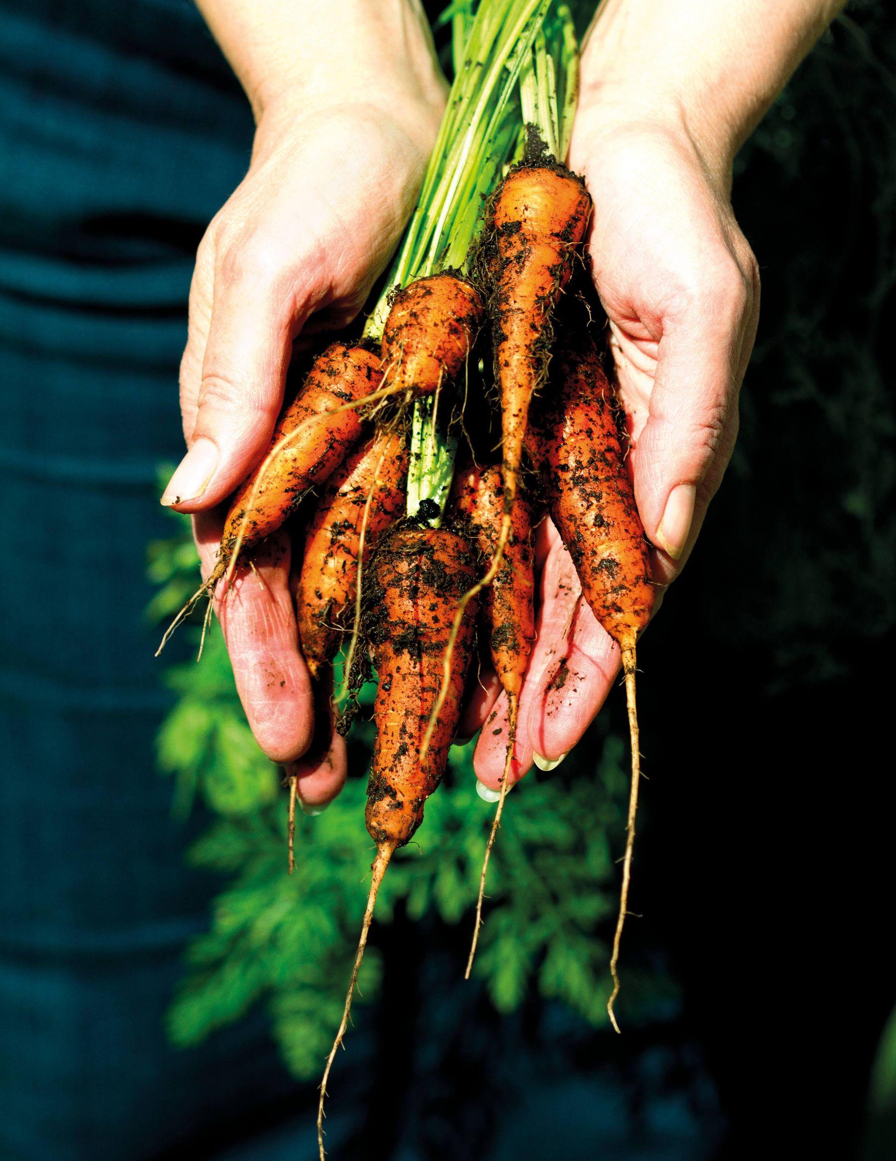 cách trồng và chăm sóc rau củ tại nhà