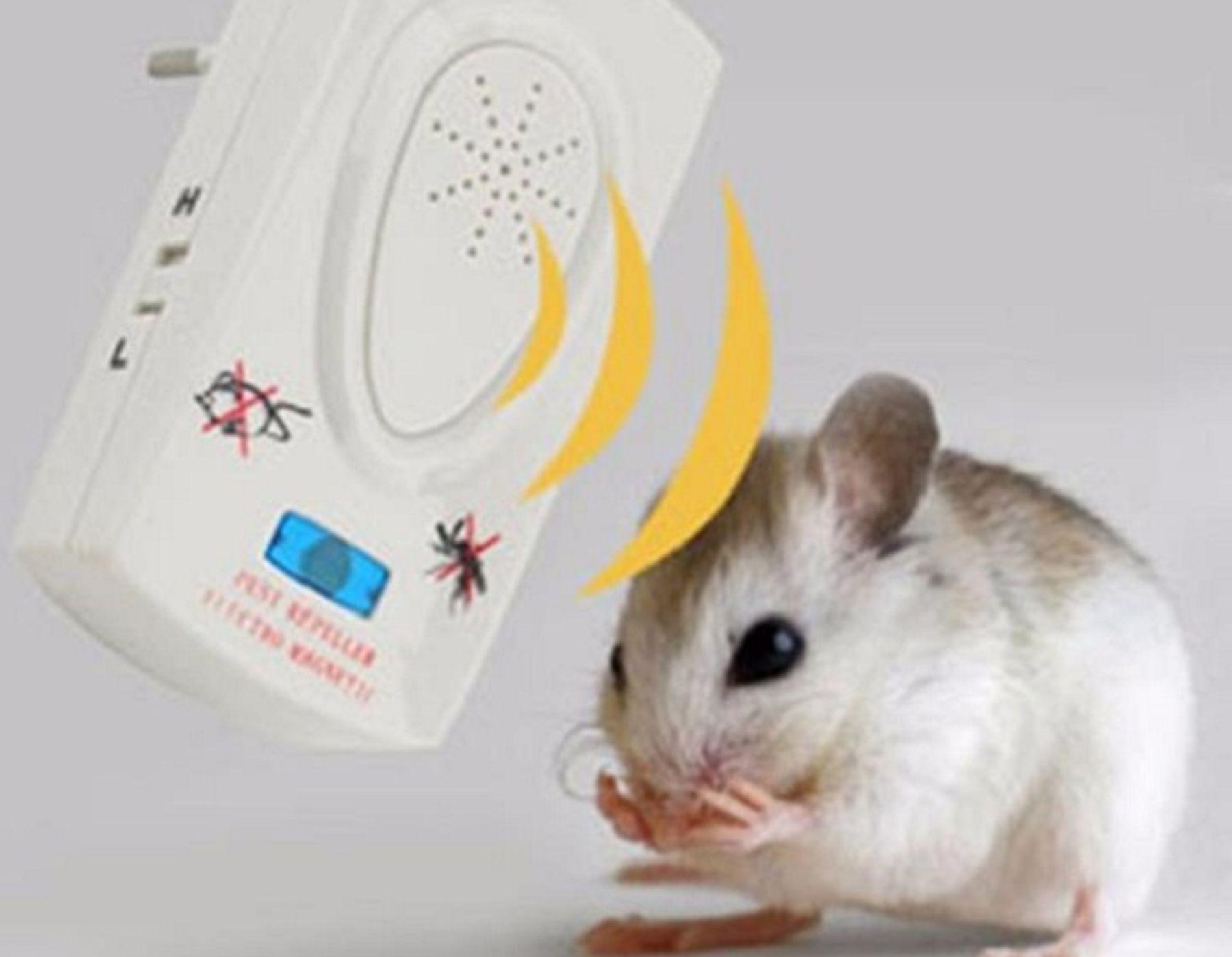 Cách đuổi chuột bằng máy