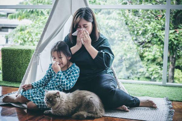 Cara Menghilangkan Bau Pipis Kucing dan Anjing Di rumah
