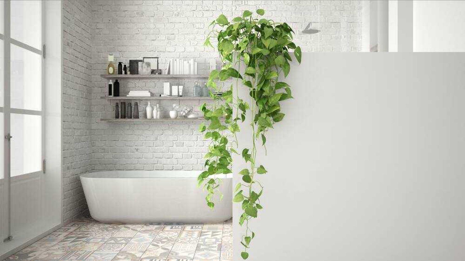 Trang trí cây xanh phòng tắm trong nhà