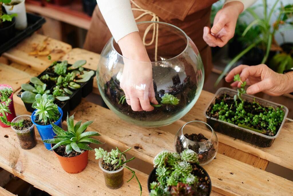 Kinh doanh online hạt giống trồng cây